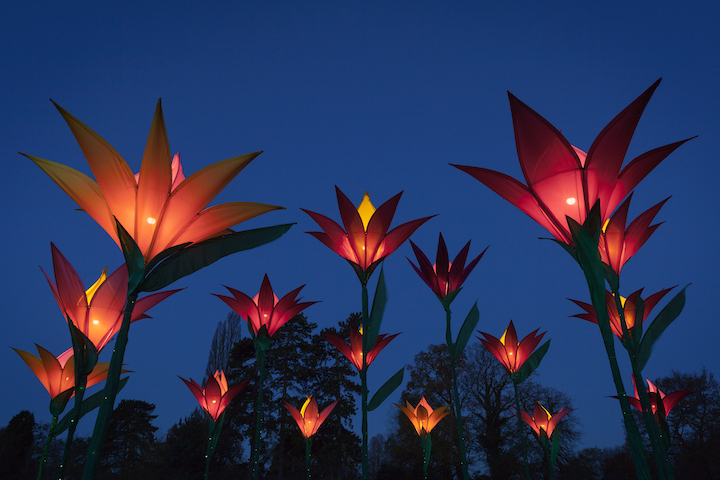 Jigantics floral light installations at night. Christmas Glow event at RHS Garden Wisley.
