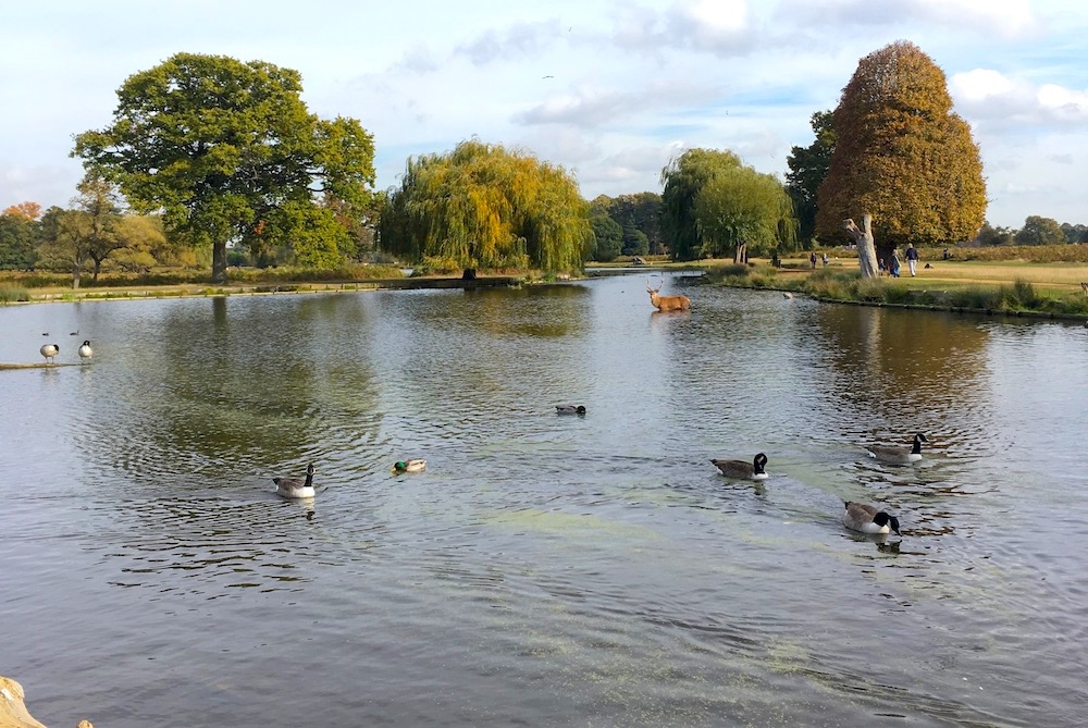 Bushy Park, Hampton Court