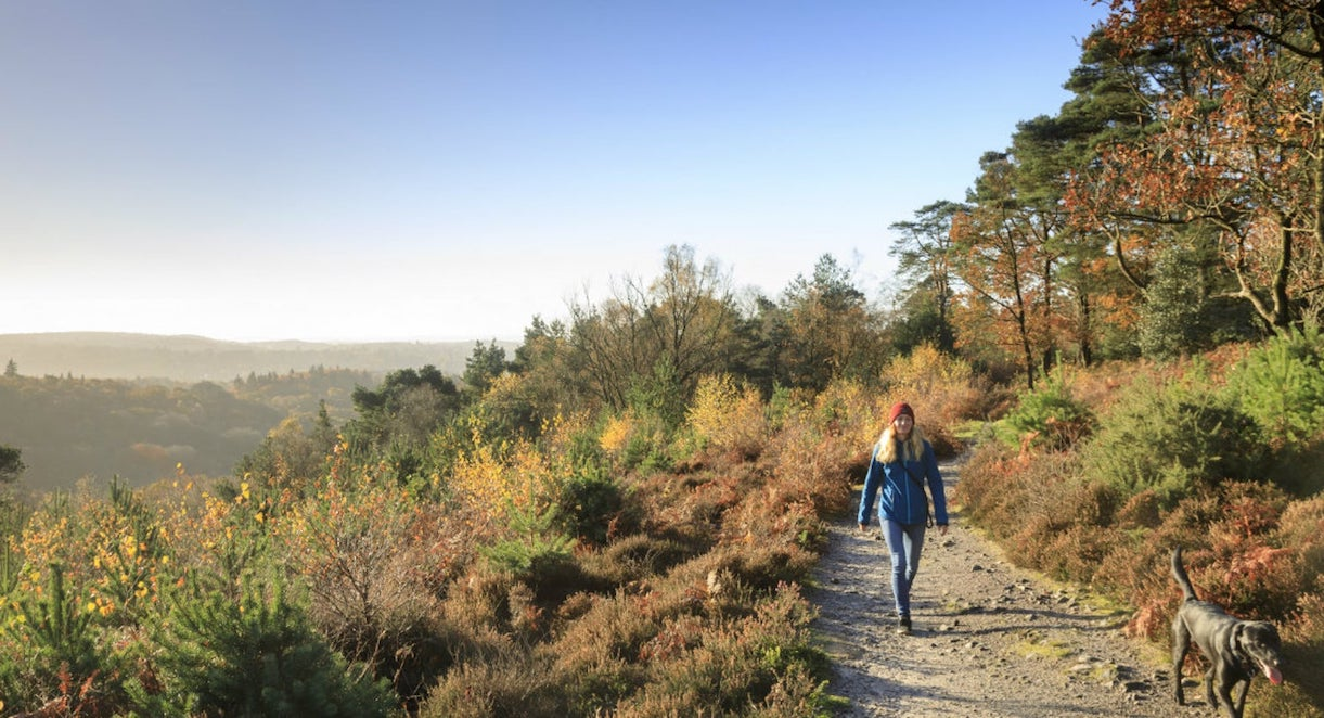 Hindhead Common, National Trust